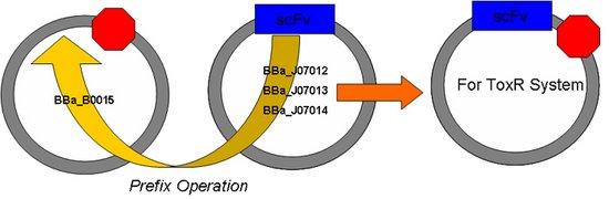 ScFv for ToxR.jpg