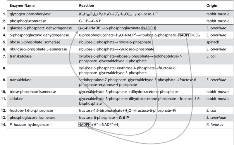 File:Enzymes6.jpg