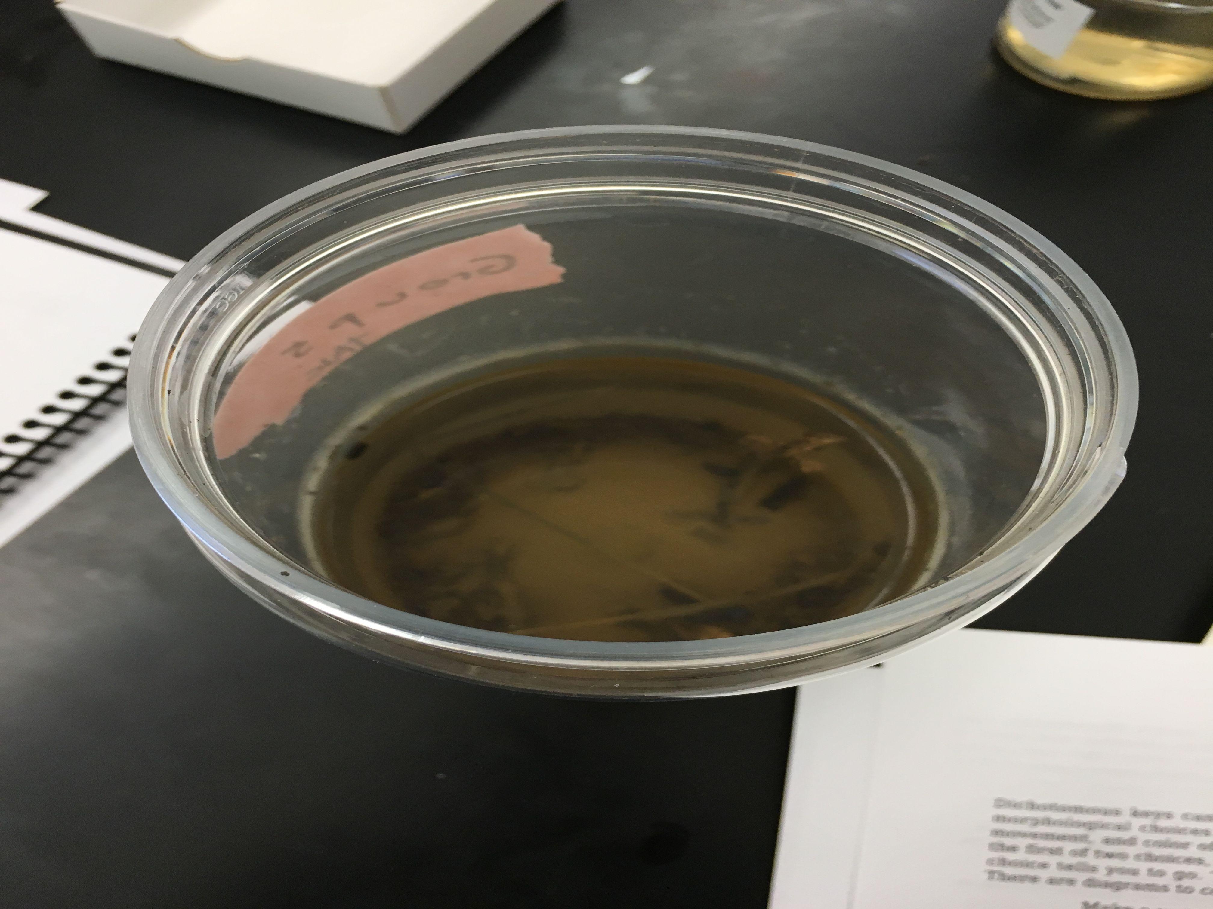Tyler Faulkner Lab1 Transect Overview.JPG