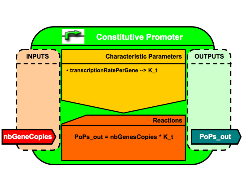 File:VBB ConstitutivePromoter.png