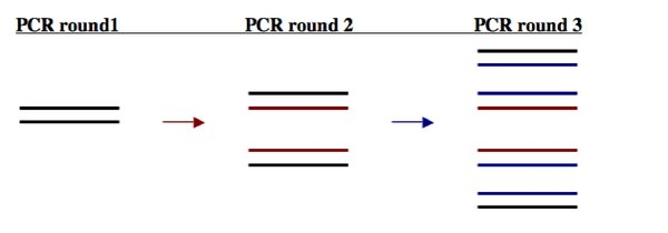 Exponential increase in PCR product through rounds of amplification.