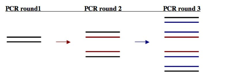 File:Be109PCRrounds.jpg