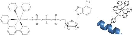 Hartings AU Phosphorylation Header.png