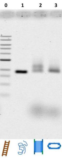 File:BM12 Nanosaurs ImageGel1 s.jpg