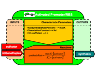 Activated Promoter/RBS Brick Architecture