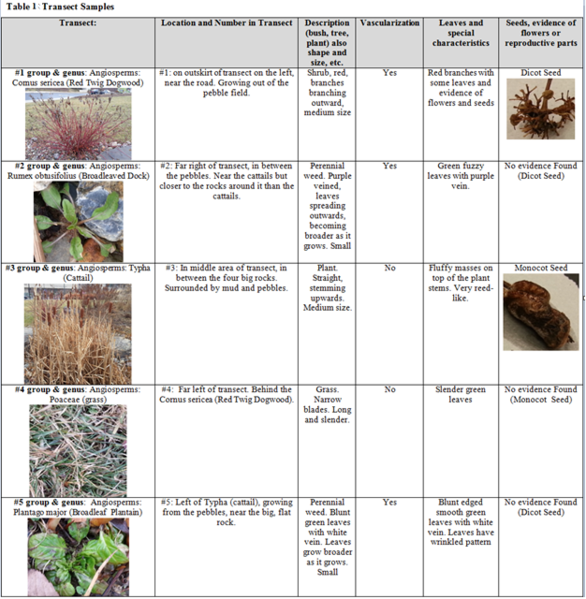 File:Transect Samples.PNG