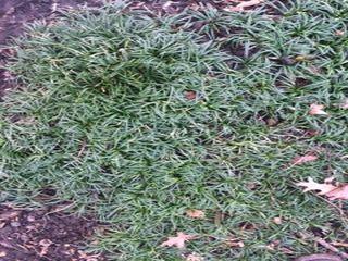1 inch green grass.jpg
