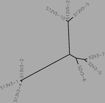 Figure 262: The midvisit tree for subjects 2, 12, 13 (the nonprogressors), generated by CLUSTALW.