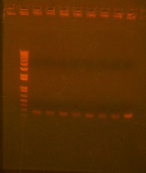 7 with 10 redo col PCR.jpg