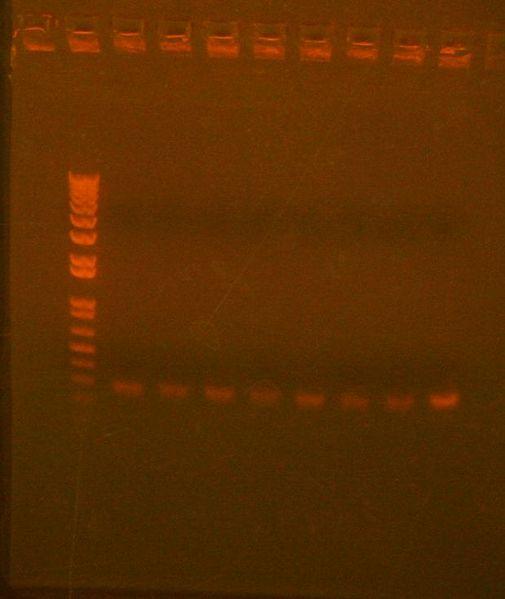 File:7 with 10 redo col PCR.jpg
