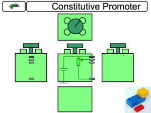 Constitutive Promoter Component