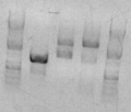 Thumbnail for version as of 16:14, 3 March 2010