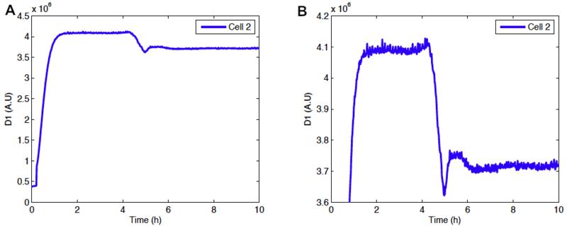 File:Oscillator1.png