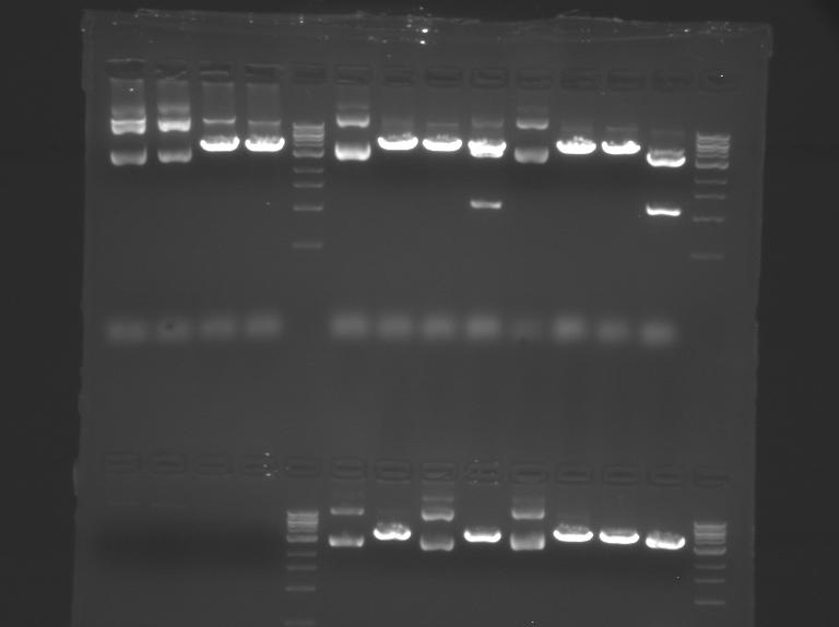 File:TR Pink gel2.bmp