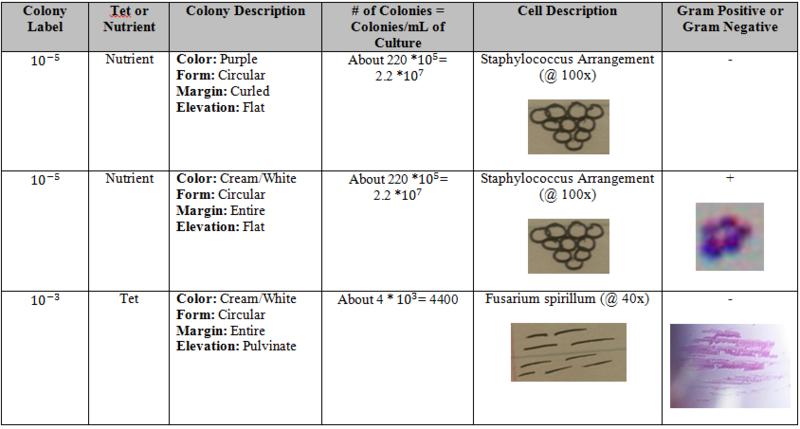 File:Bacteria Cell Morphology Observations.PNG