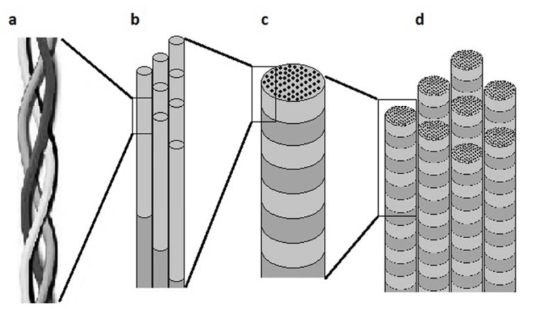 File:Collagenstructure.PNG