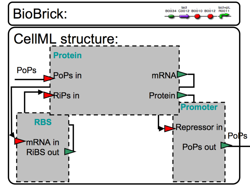 File:BBa Q04121 CellML 2.png