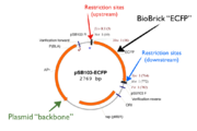 "An actual circular diagram of a BioBrick, flanked by restriction sites and packaged within a plasmid ""backbone""[1]."