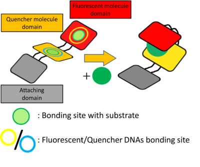 Fig.6 Schematic of DNA Shell in detail