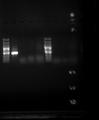 !OCT15-PCR.tif