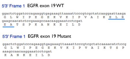 Figure 4: DNA and amino acid sequence of wild type EGFR exon 19 and del746-750 mutant. Translated mutant sequence from 20.109 White T/R group HCC-827 forward sequencing reaction.