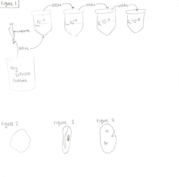 File:Figures lab 2.png