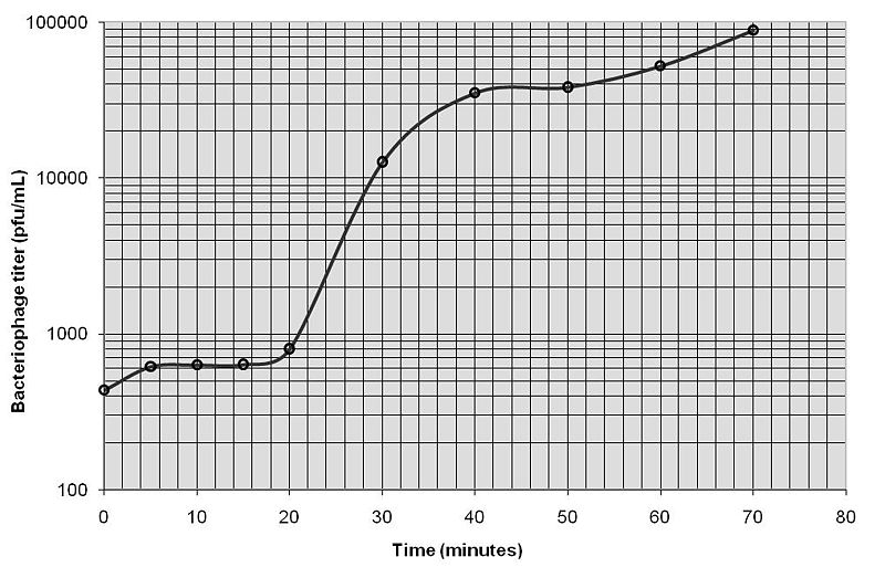 File:Lab 1 Bacteriophage Growth Curve.jpg