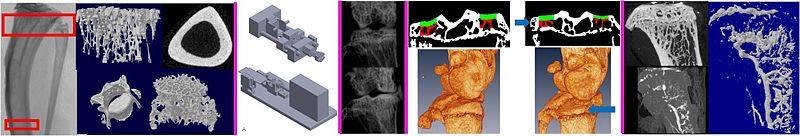 File:Pathomechanobiology Banner2.JPG