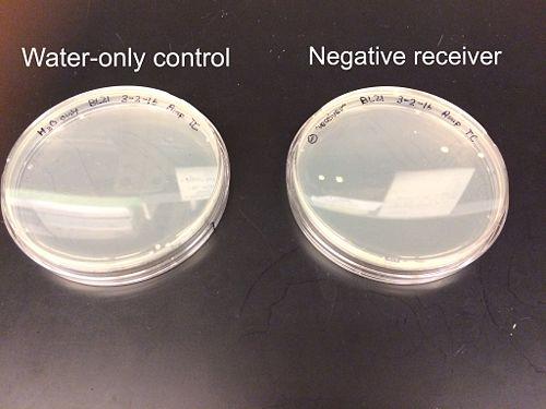 Negative control receiver plates