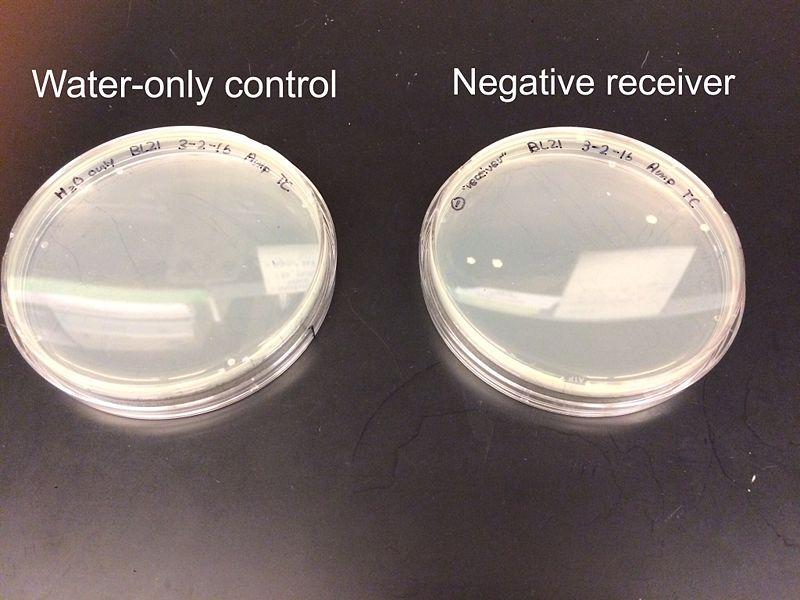 File:03-03-16 Negative Receiver Plates.jpg
