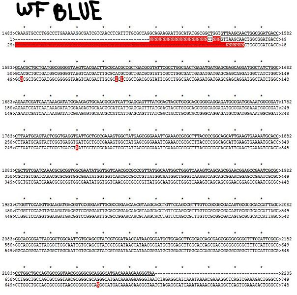File:Wf blue mutation sequence comparison.jpg
