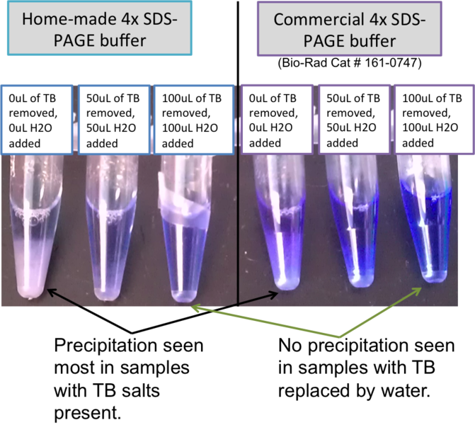 Image:2014 03 03 precipitate in SDS-PAGE TB culture samples.png