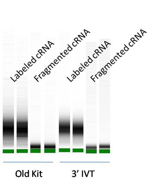 File:BioMicroCenter Old v IVT 1.jpg