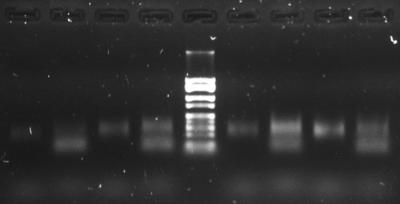 PCR 09092015.jpg.png
