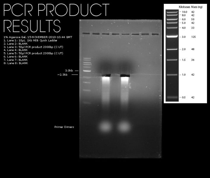 File:15112010-pcr-result.jpg