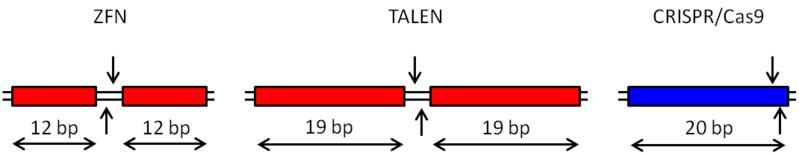 File:GenomeEditPic.png