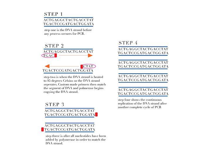 BME100 Group6 PCR.jpg