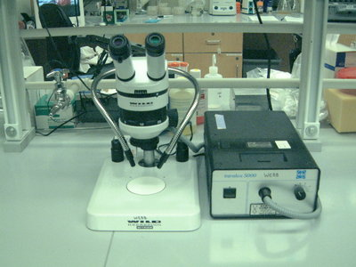 Conventional Microscope
