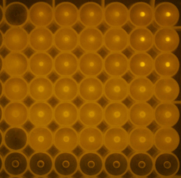 Image:063009 strep tag assay - cropped.jpg