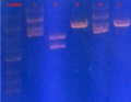 Thumbnail for version as of 09:44, 16 October 2013