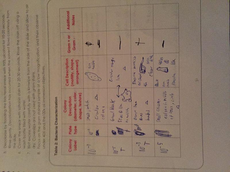 File:Chart of Bacteria.JPG