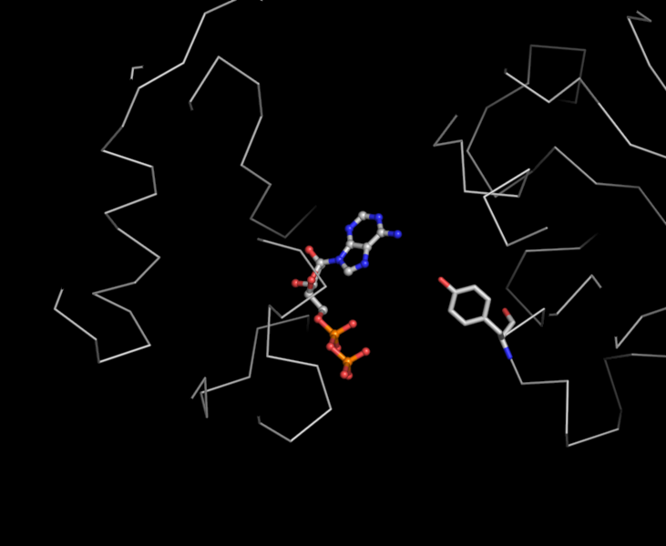 File:Fig5-ADP bs-lsqF-APOlike.png