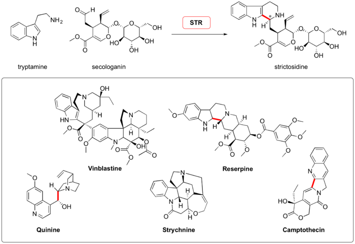 Scheme: (Waldmann, 2011). Natural substrates of strictosidine synthase and some monoterpenoid indole alkaloids accessible via this biocatalytic Pictet-Spengler reaction. C-C Bonds formed during Pictet-Spengler condensation and retained in the final product are shown in red.