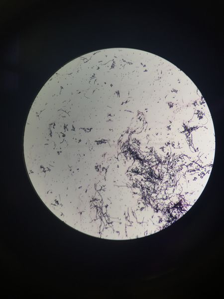 File:Image1588JPG. Bio210 Figure 2