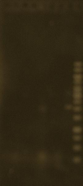 File:PCR p30-MinBP 24Jun2010.JPG