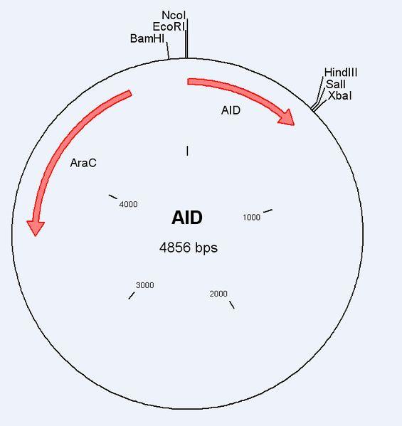 File:UW AID.wmf
