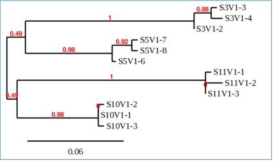 Mkphylogenetictreeactivity2.PNG
