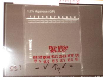 PCR 1215.JPG