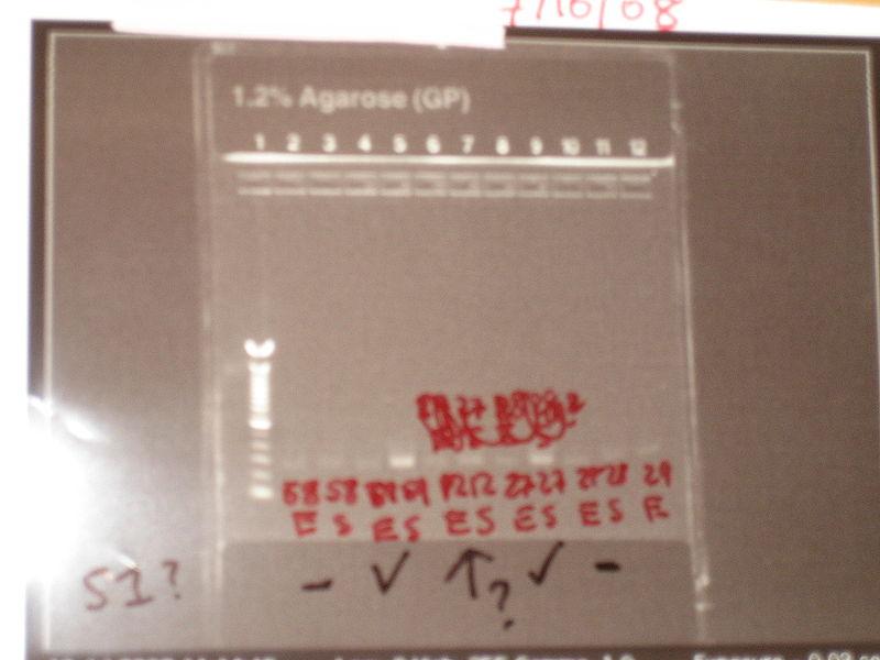File:PCR 1215.JPG