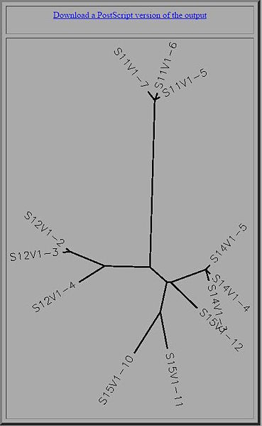 File:Shiv tree.jpg